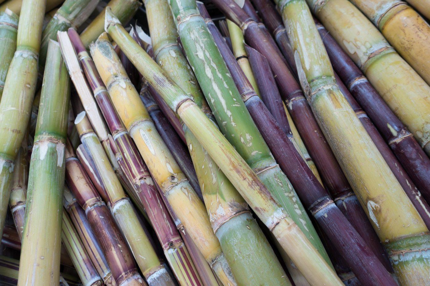 Zuckerrohr in unterschiedlichen Farben: grün, gelb, lila